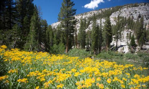 Pacific Crest Trail California