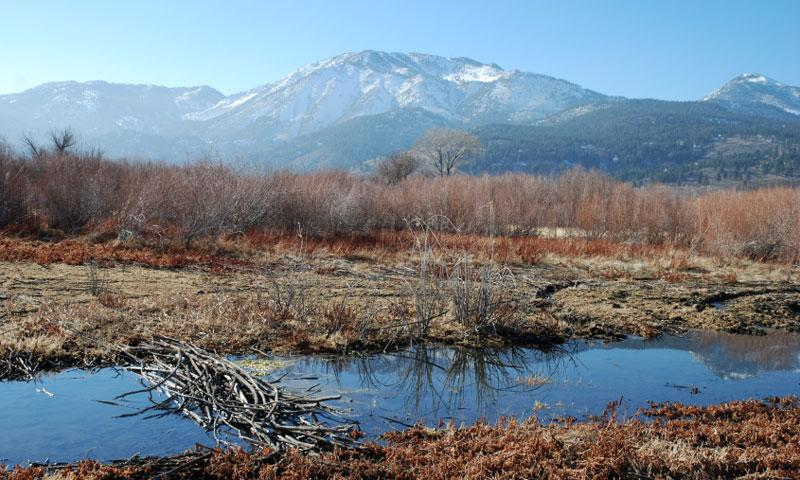 Mount Rose in the Humboldt Toiyabe National Forest