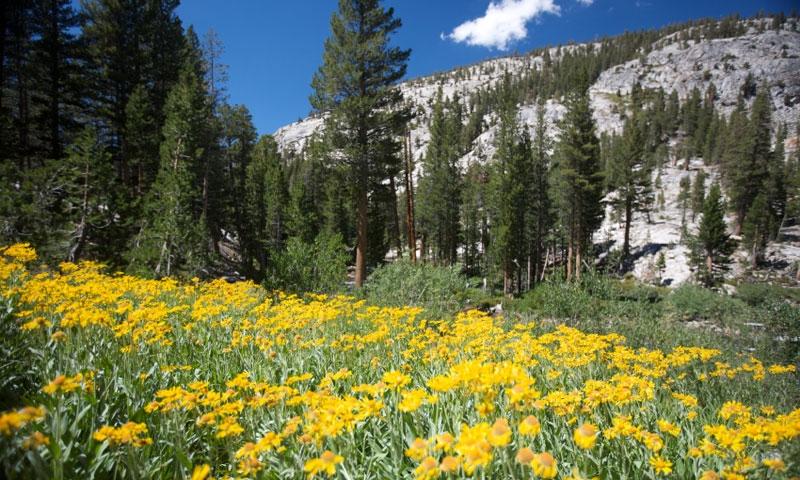 Lake Tahoe Summer Vacation Hiking Trail