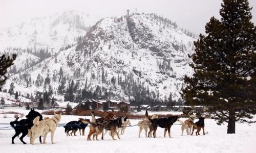 Lake Tahoe Ski Vacations Dog Sledding