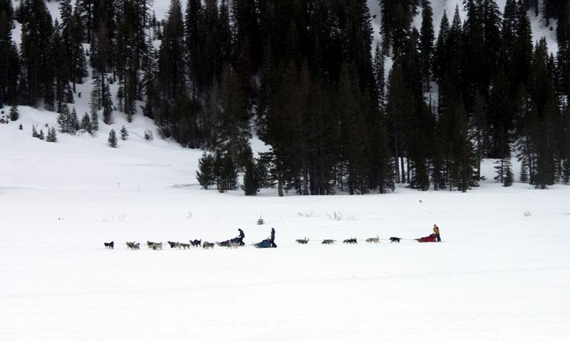 Dog Sledding near Lake Tahoe